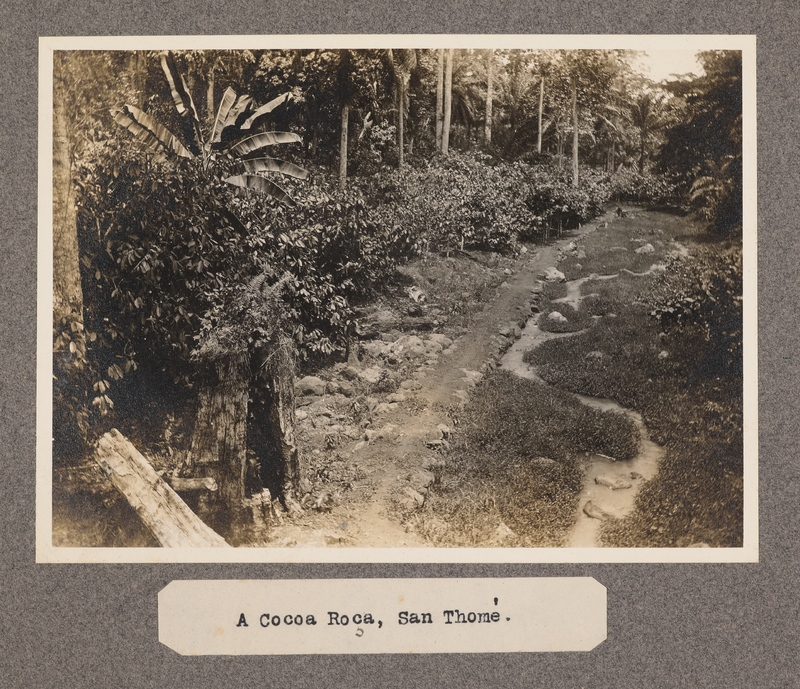 A Cocoa Roca, San Tomè.
