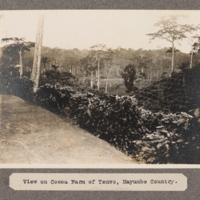 View on Cocoa Farm of Temvo, Mayumbe Country.