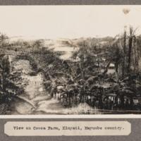 View of Cocoa Farm, Kinyait, Mayumbe country.