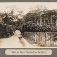 View of Temvo Plantation, Mayumbe.