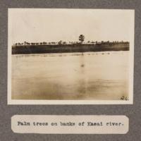 Palm trees on banks of Kasai River