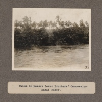 Palms in Messrs. Lever Brothers' Concession. Kasai River
