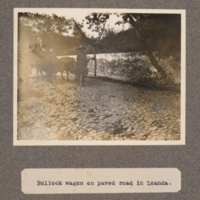 Bullock wagon on paved road in Loanda