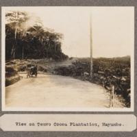 View of Temvo Cocoa Plantation, Mayumbe