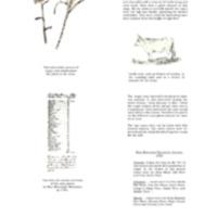 2007 Bittersweet Banner 3.pdf